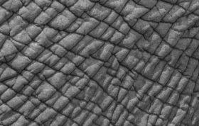 Elephant, Textures, Skin