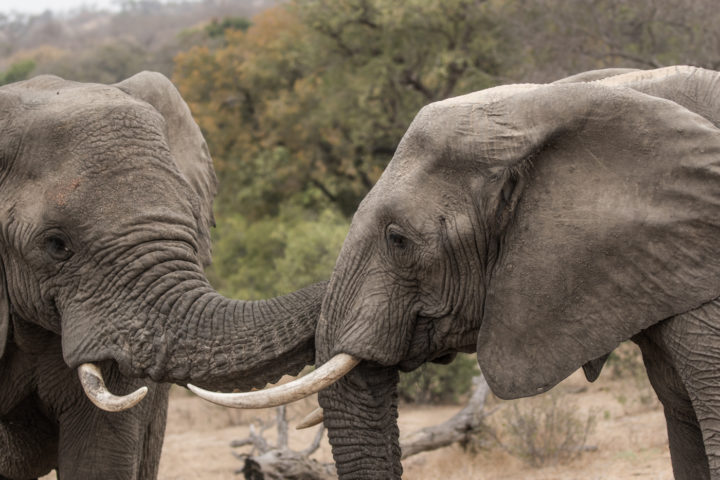Guest image, Judy Boch, elephant interaction