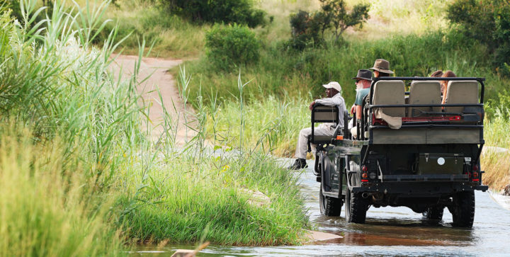 Londolozi safari vehicle driving across the Sand River looking for wildlife in the greenery