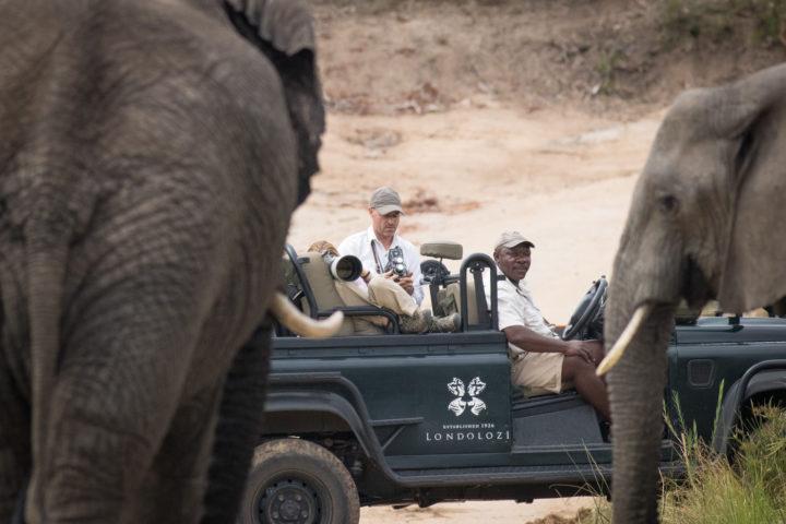 elephants, Sandros, JT