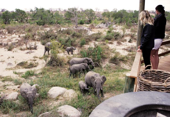 elephants, founders