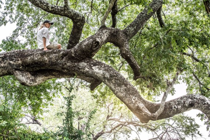 The best view from a tree at Londolozi Game Reserve