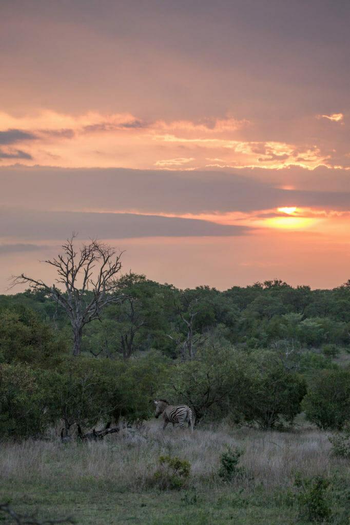 Zebra, sunset, clouds, colours, PT, 2018