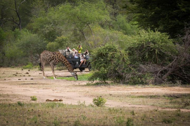 Giraffe Drinking Don Heyneke