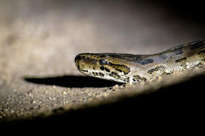 Python Night