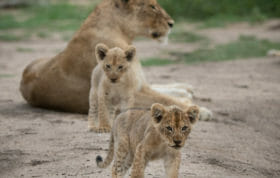 Ntsevo And Cubs Jan 2018 Grant Rodewijk