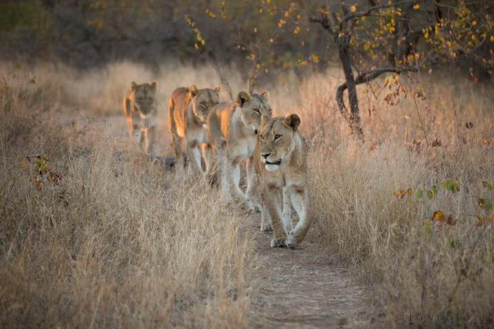 Mhangeni Lionesses Jt
