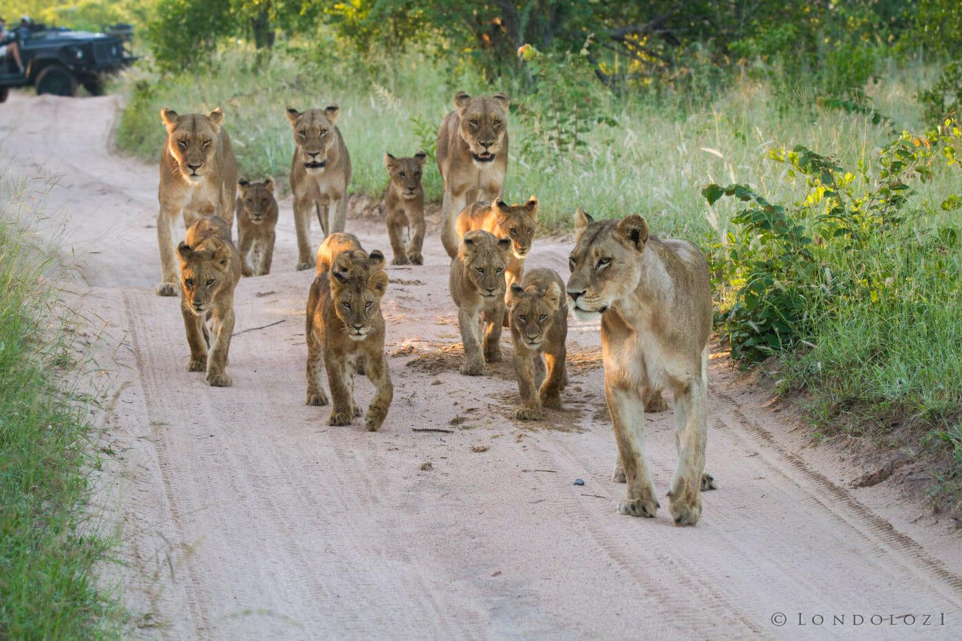 Mhangeni Lionesses Cubs Jt