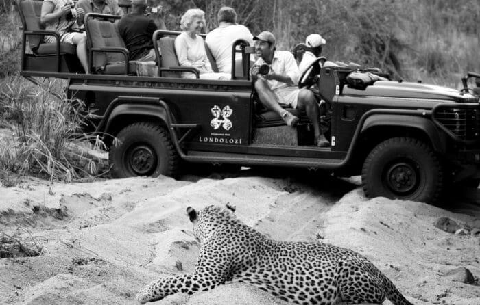 Hobbo Marthly Male Leopard