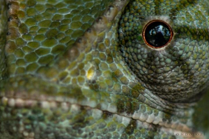 Rob Crankshaw Chameleon 4