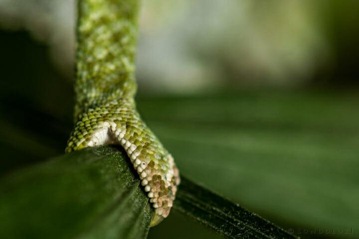 Rob Crankshaw Chameleon 5
