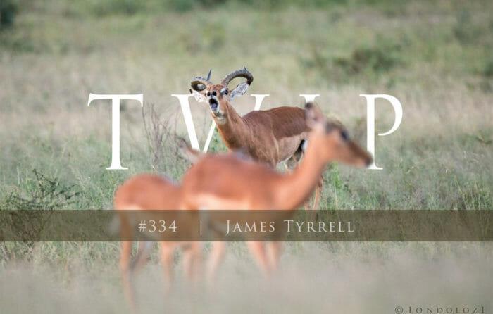 00 Twip Temp1