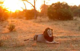Majingilane Sunrise Jt