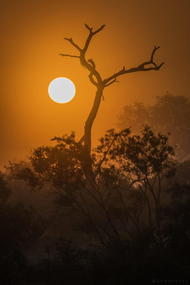Sunrise AJ