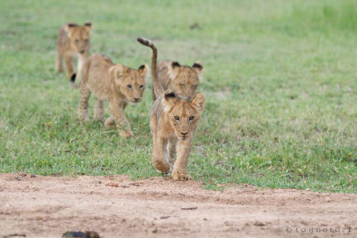 Tsalala Cubs 2013 Jt