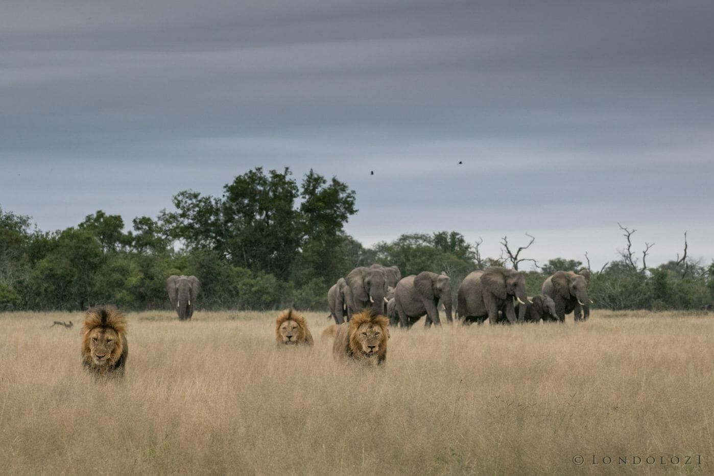 Ntsevu Birmingham Elephants Gb 2