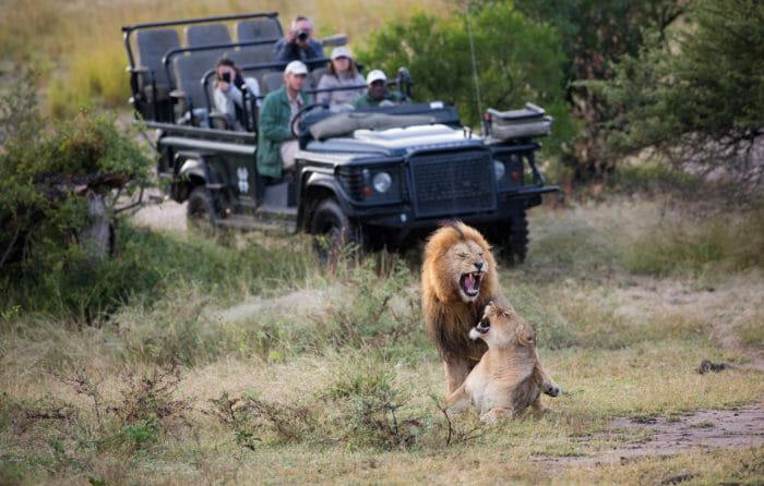 Birmingham Mhangeni Lioness Jt 4