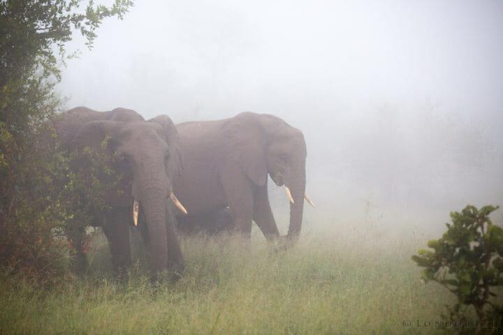 Elephant Mist Jt