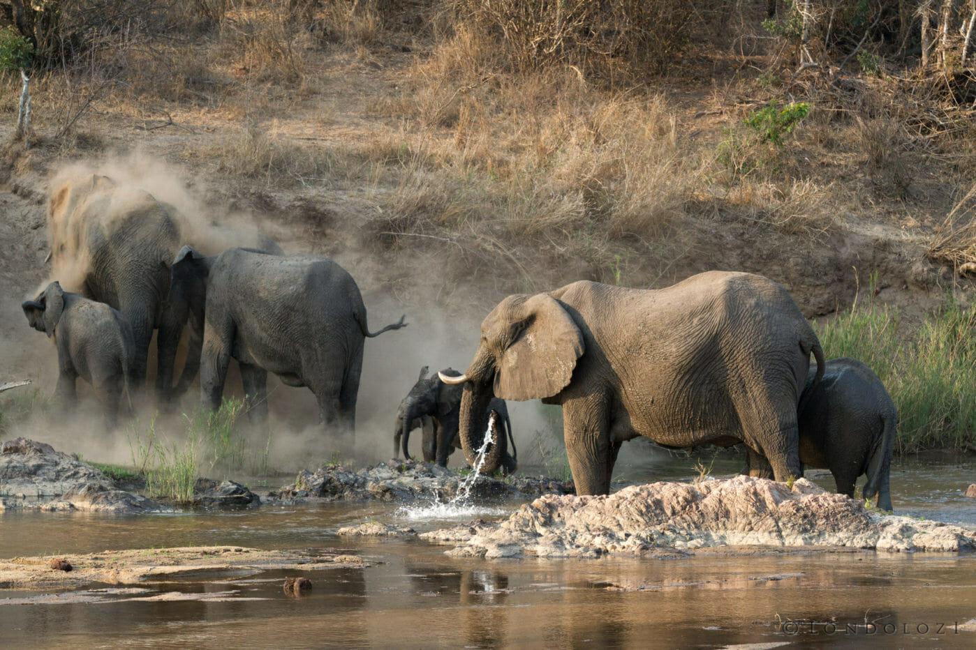 Elephants Dust Sand River Jt