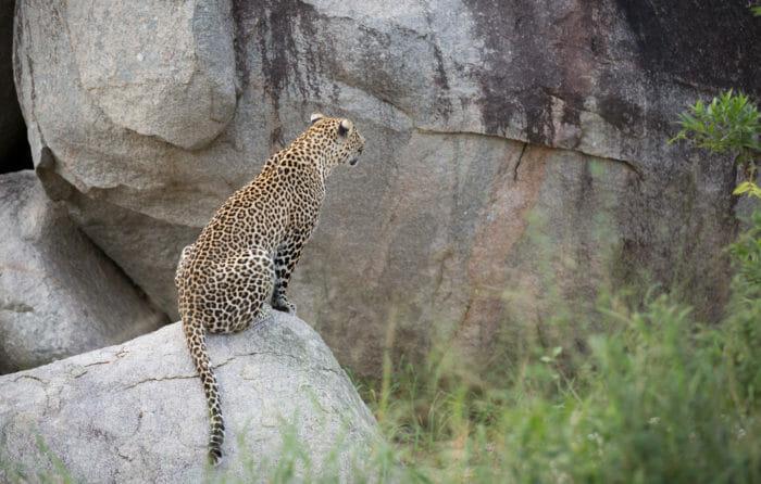 Unidentified Male Nhlanguleni Cubs Jt 5