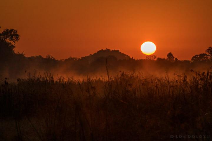 Sun Rise Fin Foot Gr 1 Of 1