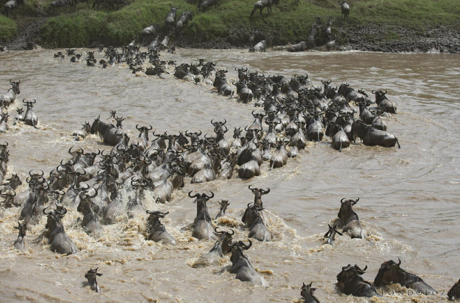 Wildbeest Crossing Jt