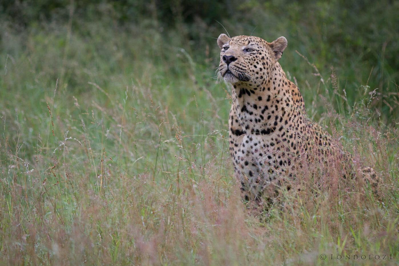 Camp Pan Leopard Jt