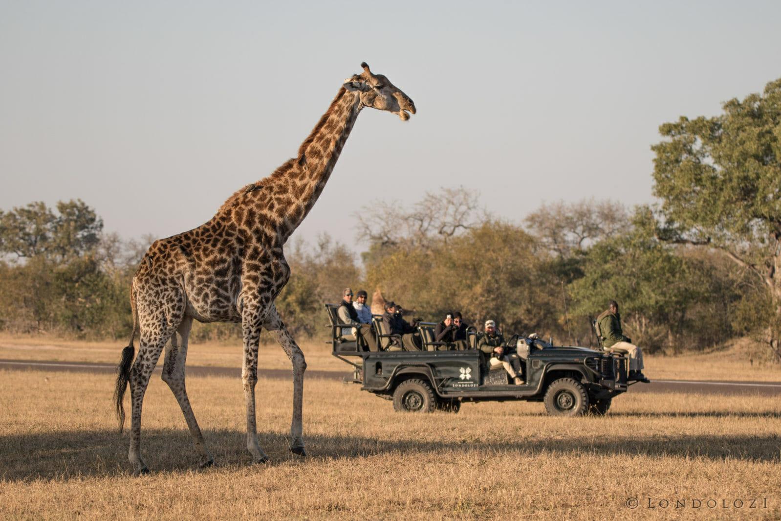 giraffe, airstrip, guests, alex jordan, lucky shibangu, PT 2018