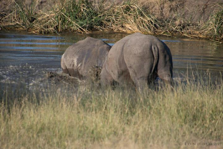 Rhino Fight Rj 2