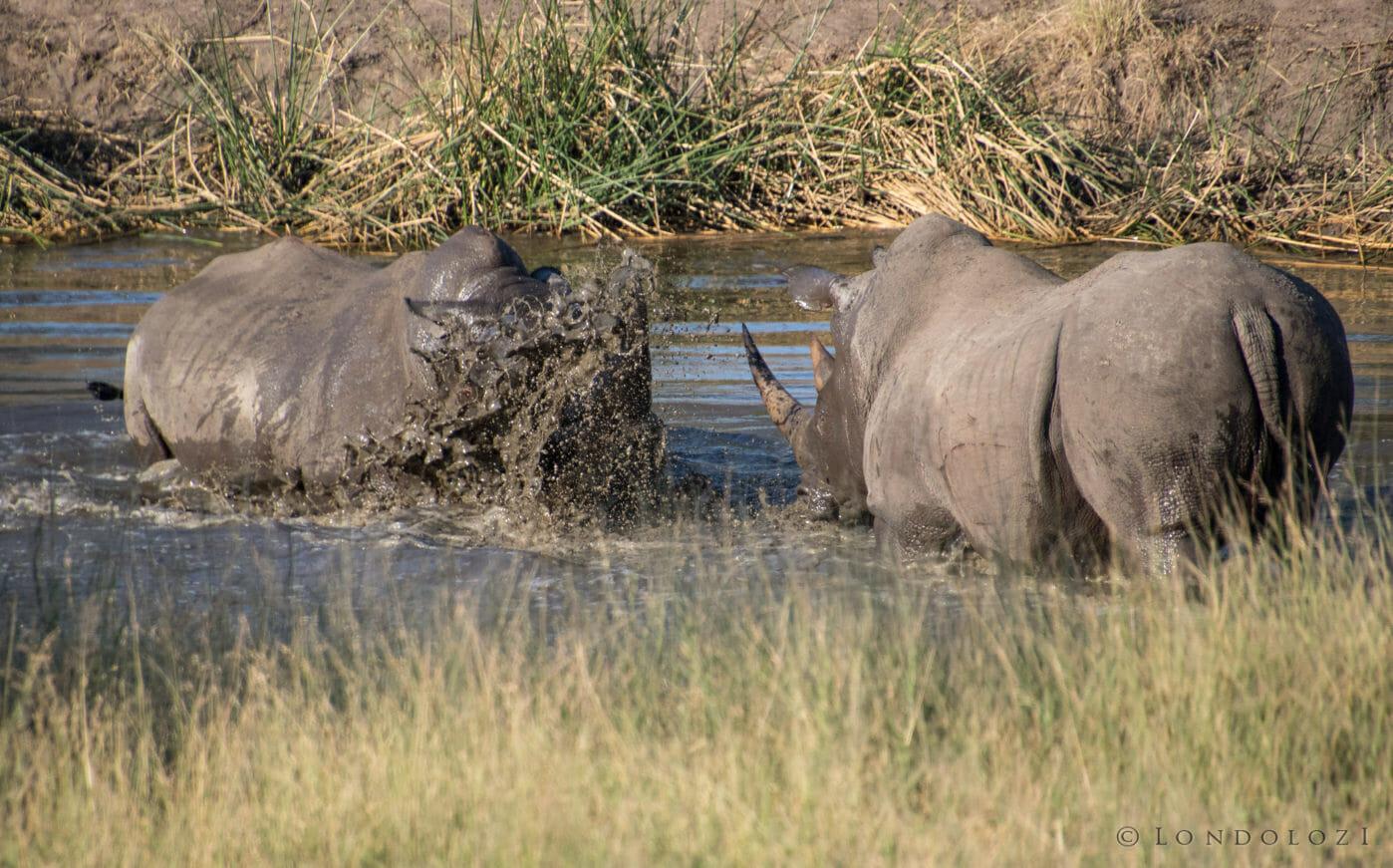 Rhino Fight Rj 3