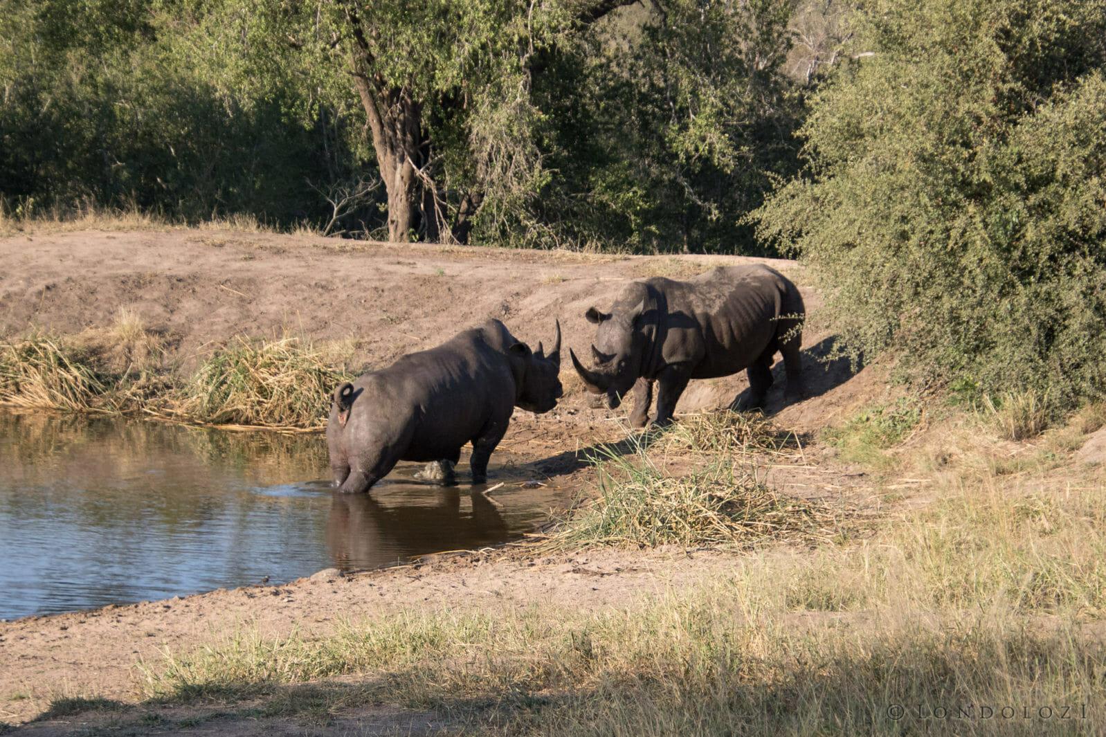 Rhino Fight Rj