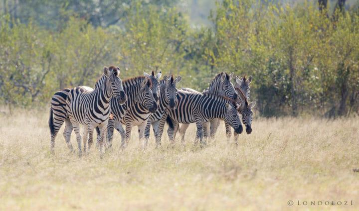 Zebra Group Jt
