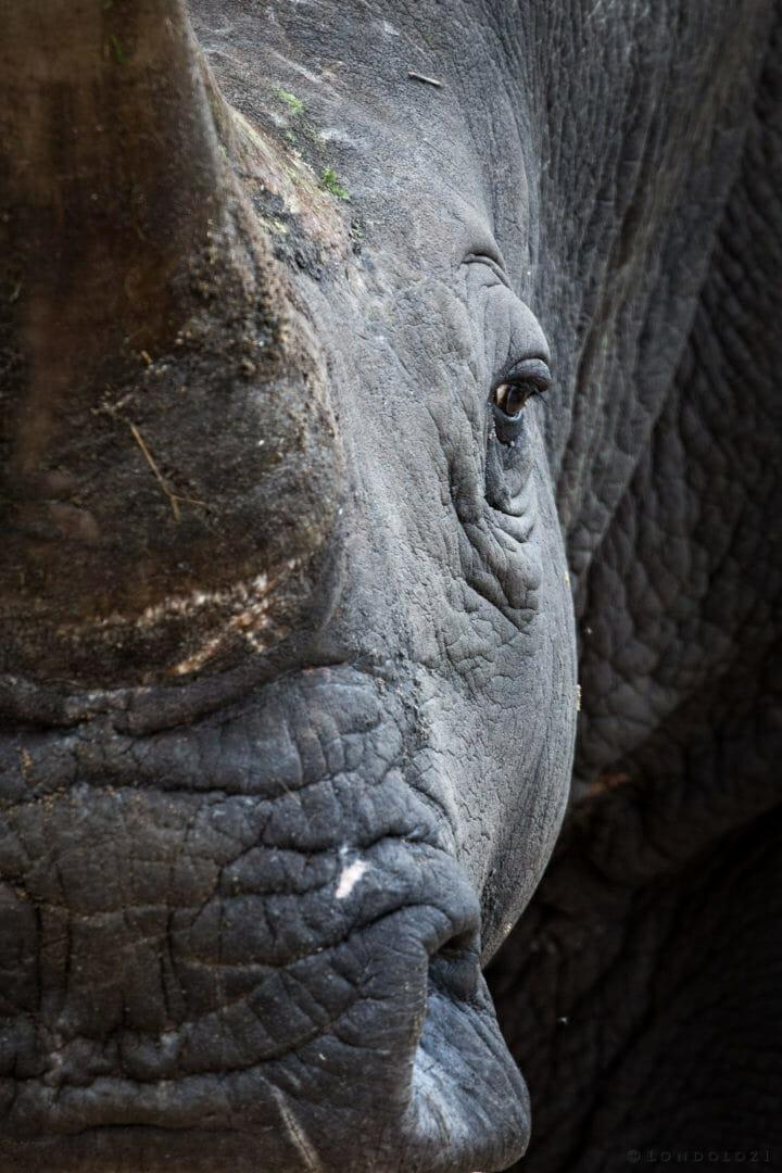 Rhino Face 2 Jt