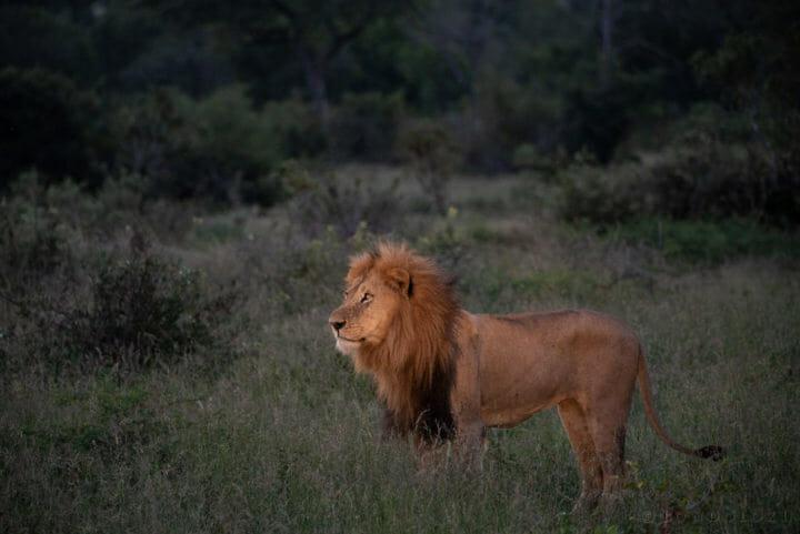 Birmingham lion Brock Cartlidge