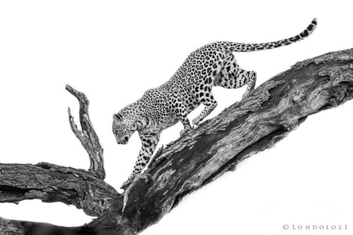 Nkoveni, dead tree - AJ 2018