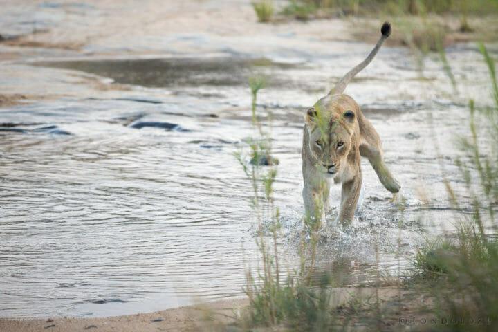 Mhangeni Reed Sip Sand River Taylors Crossing Jt