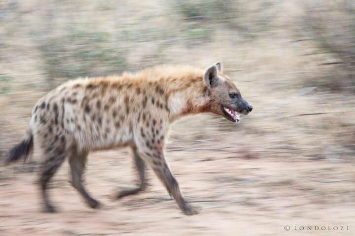 Hyenas Clash 2 Jt 3