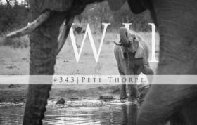 Twip343
