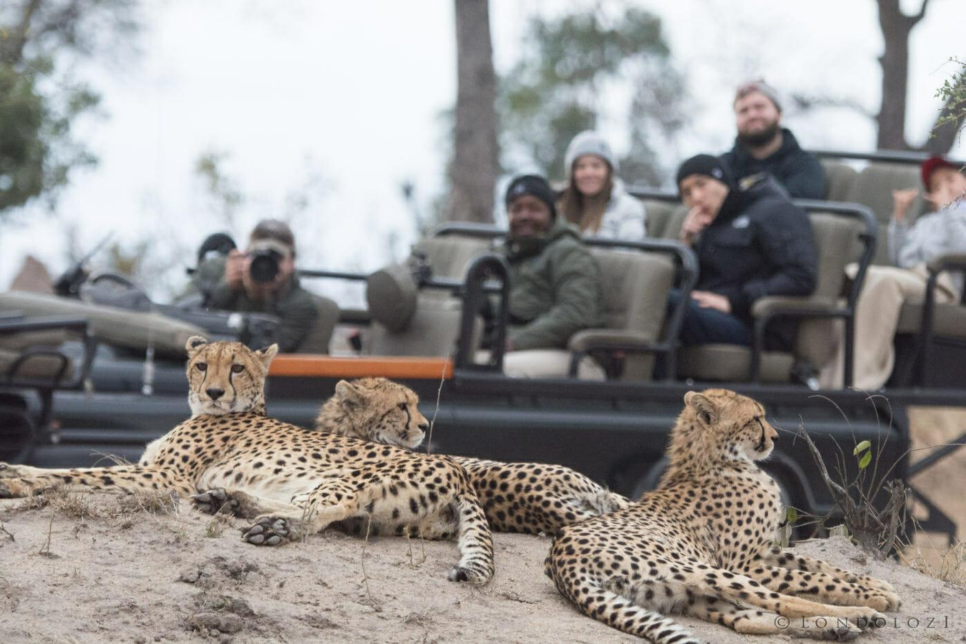 Cheetah Sz 3