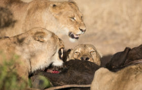 Mkahuma Mhangeni Lions Jt 2