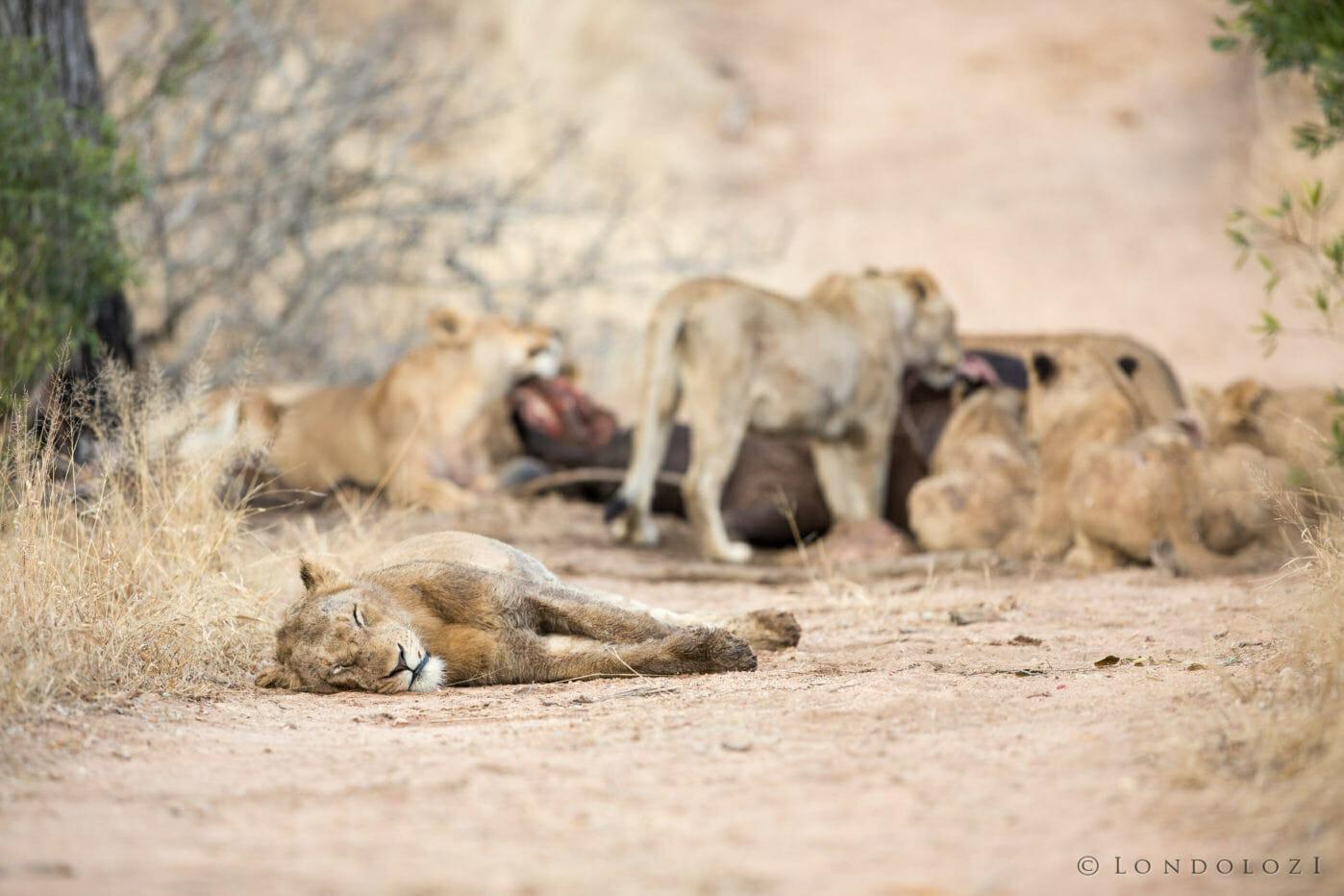 Mkahuma Mhangeni Lions Jt