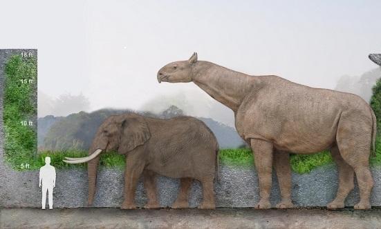 Paraceratherium 1655614 M1