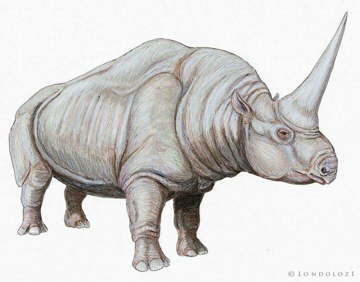 800px Elasmotherium Cauc1db