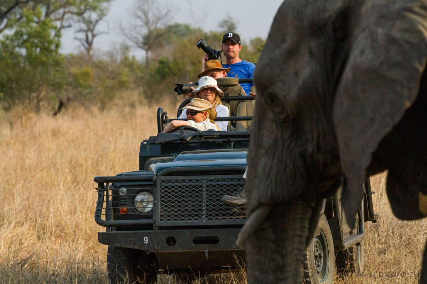 Smith Family Elephant