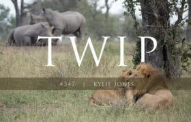 Twip 347