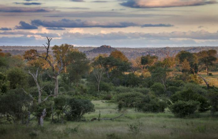 Lowveld Landscape Rich Laburn