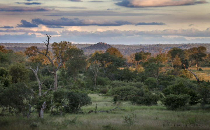 A landscape view of the lowvelt. Trees, grass, mountains and clouds in the sky make up this view of Londolozi.