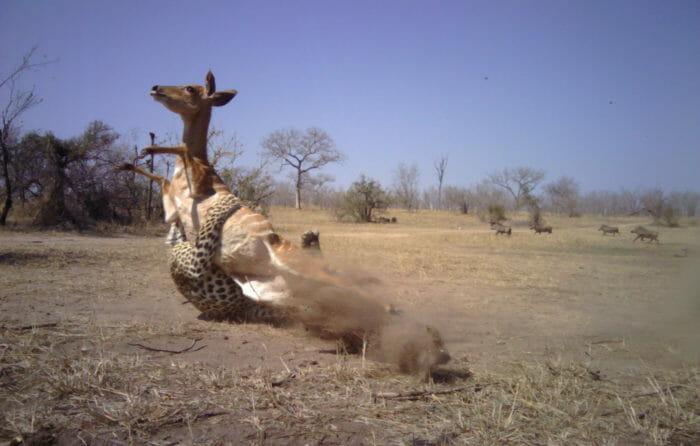 Ndzanzeni Young Male