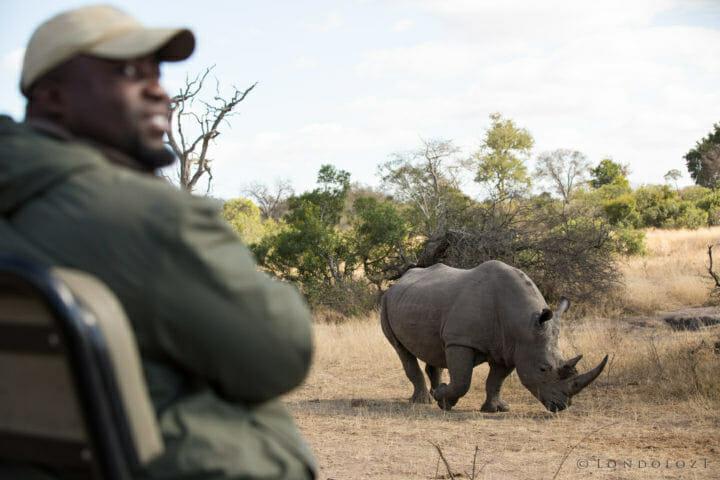 Euce Rhino
