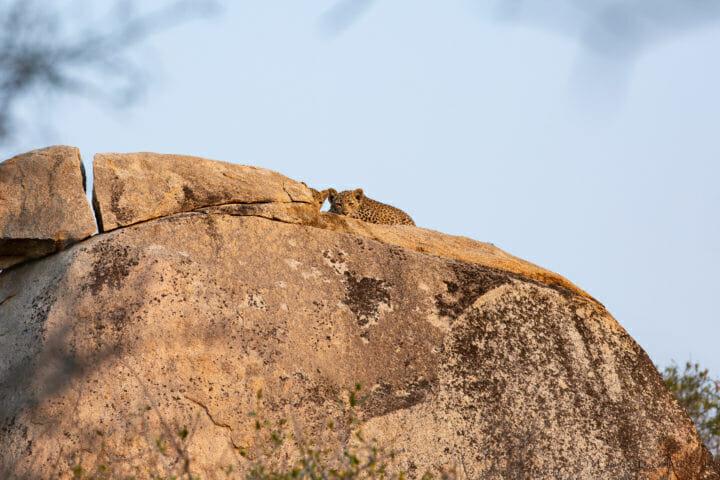 Nhlanguleni Leopard Cubs Boulder